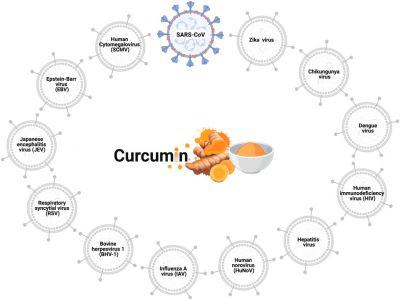 Phát triển hệ thống Nano Curcumin - tiềm năng trong điều trị COVID-19